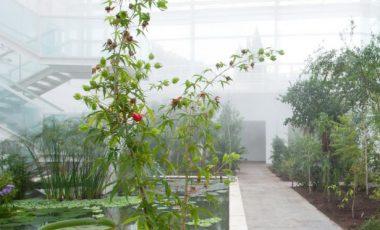 Orto Botanico di Padova-5